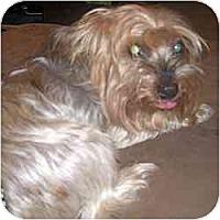 Adopt A Pet :: Sammy - GAINESVILLE, TX