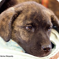 Adopt A Pet :: Willow - Hagerstown, MD
