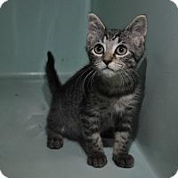 Adopt A Pet :: Felicity - Rockaway, NJ
