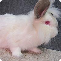 Adopt A Pet :: Sherbie - Newport, DE