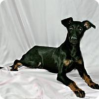 Adopt A Pet :: Rose - Lufkin, TX