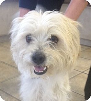 Terrier (Unknown Type, Small) Mix Dog for adoption in Las Vegas, Nevada - Speckles