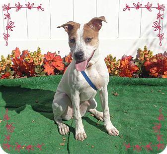 Pointer Mix Dog for adoption in Marietta, Georgia - SUZETTE