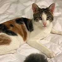 Adopt A Pet :: Callie-April - Devon, PA