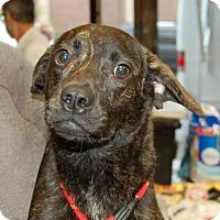 Adopt A Pet :: Jet - Brooklyn, NY