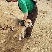 Adopt A Pet :: Buster - Walthill, NE