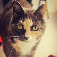 Adopt A Pet :: Madison - Winona, MN