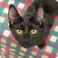 Adopt A Pet :: Johnny - Naperville, IL