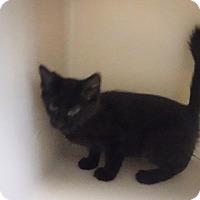 Adopt A Pet :: Kala - Batesville, AR