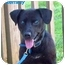 Photo 2 - Labrador Retriever Mix Dog for adoption in Floyd, Virginia - Remmy