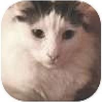 Adopt A Pet :: Darius - Vancouver, BC
