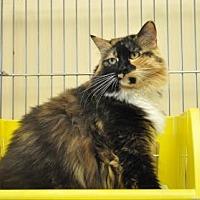 Adopt A Pet :: Roberta - Pompano Beach, FL