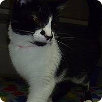 Adopt A Pet :: Bianca - Hamburg, NY