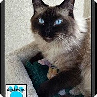 Adopt A Pet :: Mimi - Gilbert, AZ