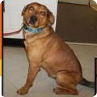 Adopt A Pet :: Luke - Kendall, NY
