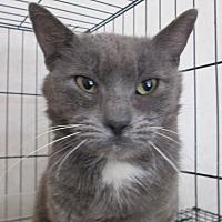 Adopt A Pet :: Tristan - San Bernardino, CA