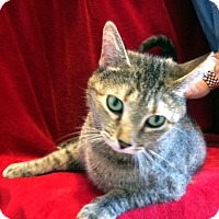 Adopt A Pet :: Miss Kitty - Concord, NC