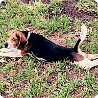Adopt A Pet :: Rusty - Houston, TX