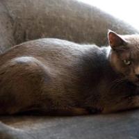 Adopt A Pet :: Prince Christian - Toronto, ON