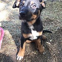 Adopt A Pet :: Marty - Regina, SK