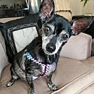 Adopt A Pet :: Delilah
