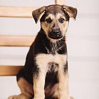 Adopt A Pet :: Viola - Portland, OR
