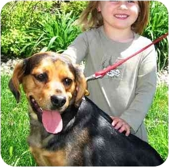 Beagle/Shepherd (Unknown Type) Mix Dog for adoption in Osseo, Minnesota - Lucy