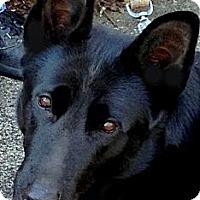 Adopt A Pet :: HALEY-PRECIOUS! - Bluff city, TN