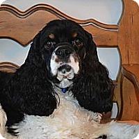Adopt A Pet :: CHARLIE - 5 - Tacoma, WA