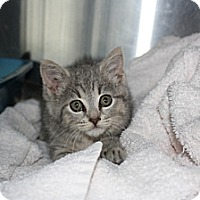 Adopt A Pet :: Annie Lou - Armuchee, GA