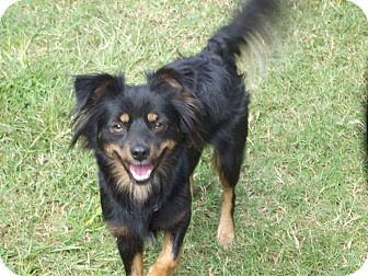 Cocker Spaniel Mix Dog for adoption in Marshall, Texas - Lilly