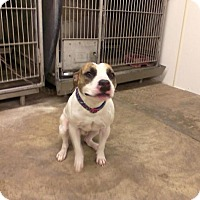 Adopt A Pet :: DOC - Upper Sandusky, OH