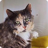 Adopt A Pet :: Lavender - Philadelphia, PA