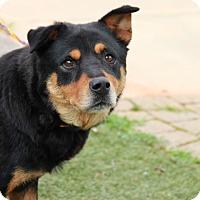 Adopt A Pet :: Roxy - Greensboro, NC