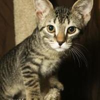 Adopt A Pet :: Micky - Chandler, AZ