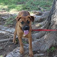 Adopt A Pet :: A10 Donna - Odessa, TX