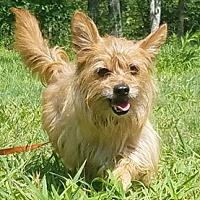Adopt A Pet :: Chico - Canterbury, CT