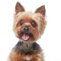 Adopt A Pet :: Cappucino - Los Angeles, CA
