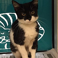 Adopt A Pet :: Angela Martin - Tampa, FL