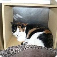 Adopt A Pet :: Karlee - Colmar, PA
