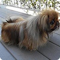 Adopt A Pet :: Fergie - Sacramento, CA