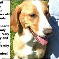 Adopt A Pet :: # 215-10 @ Animal Shelter - Zanesville, OH