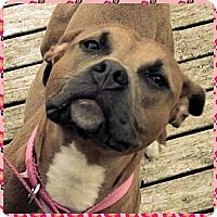 Adopt A Pet :: DIXIE - Kingston, WA