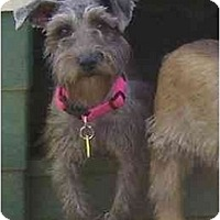 Adopt A Pet :: Pandy - Chandler, IN