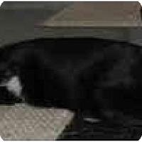 Adopt A Pet :: Noah - LUVbug - Cincinnati, OH