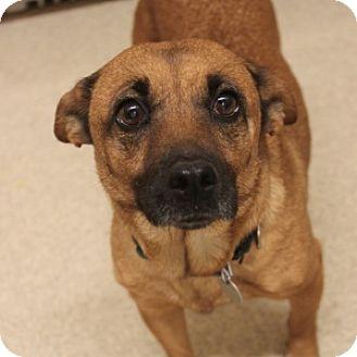 Terrier (Unknown Type, Small) Mix Dog for adoption in Naperville, Illinois - Gigi