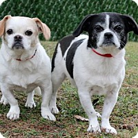 Adopt A Pet :: Luvbug - Port Washington, NY