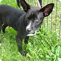 Adopt A Pet :: Sean - Delaware, OH