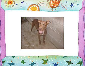 Labrador Retriever/Boxer Mix Dog for adoption in KELLYVILLE, Oklahoma - PIXIE