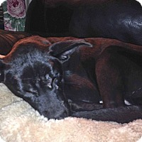 Adopt A Pet :: Buddy - Lancaster, PA